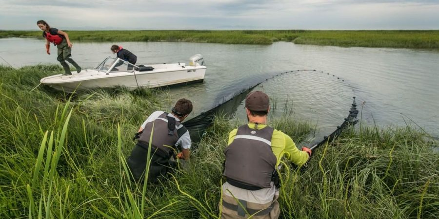 Two men with their backs to the camera lean through tall green grass to hold a net submerged in a river next to a small white motor boat on a cloudy day. There are two women working on the boat behind the men and the next as well.