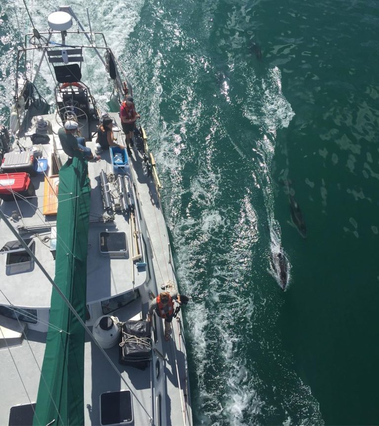 Achiever and Hakai Institute meet Pacific White Sided Dolphins