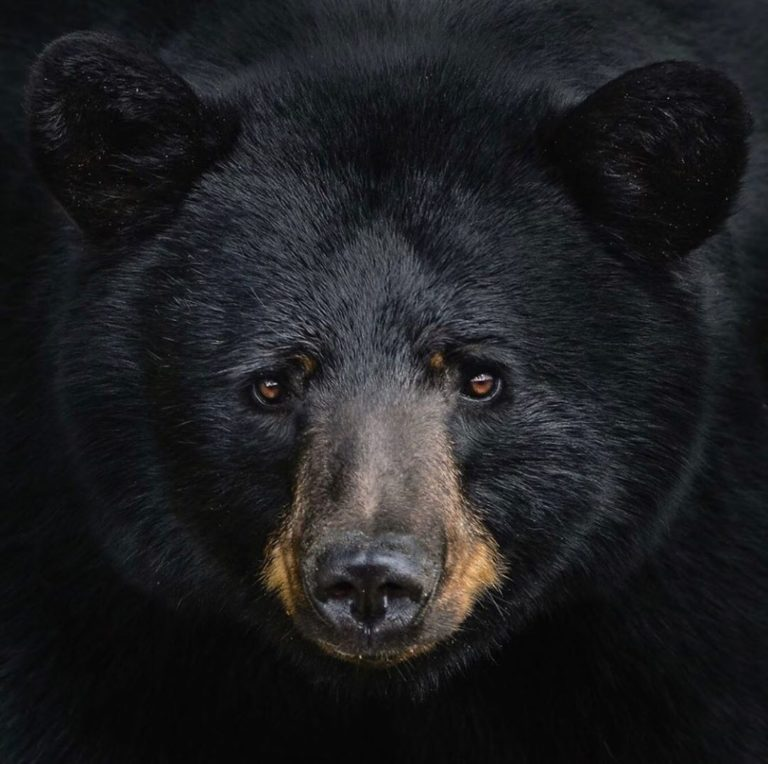 Fantastic collection of wildlife photography on display this Sunday in North Vancouver