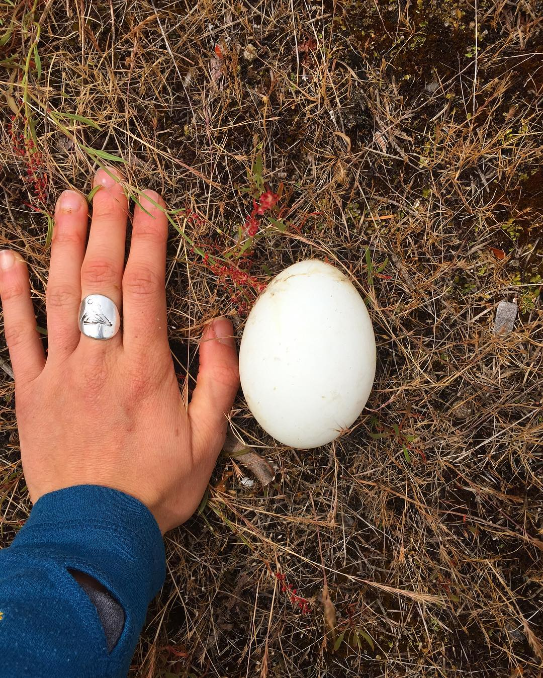 A palm wearing a ring and the wrist of a person clothed in blue rests on the brown ground besides a white egg half its size.