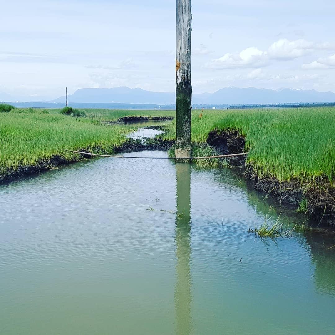 Pole visible between narrow green banks at the Steveston Jetty, grey blue water