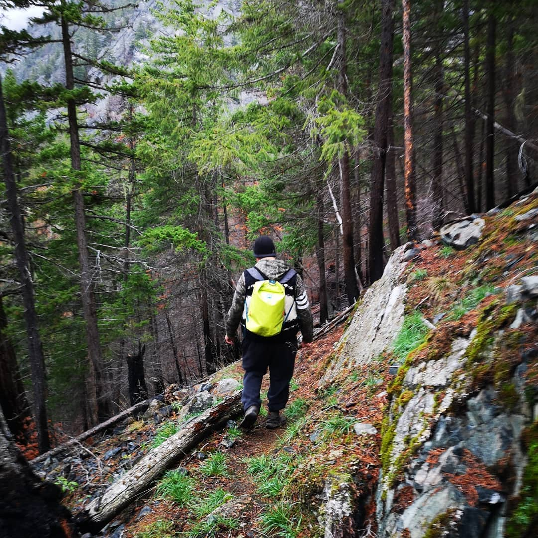 Person with a yellow backpack hiking through a forest on a mountain slope