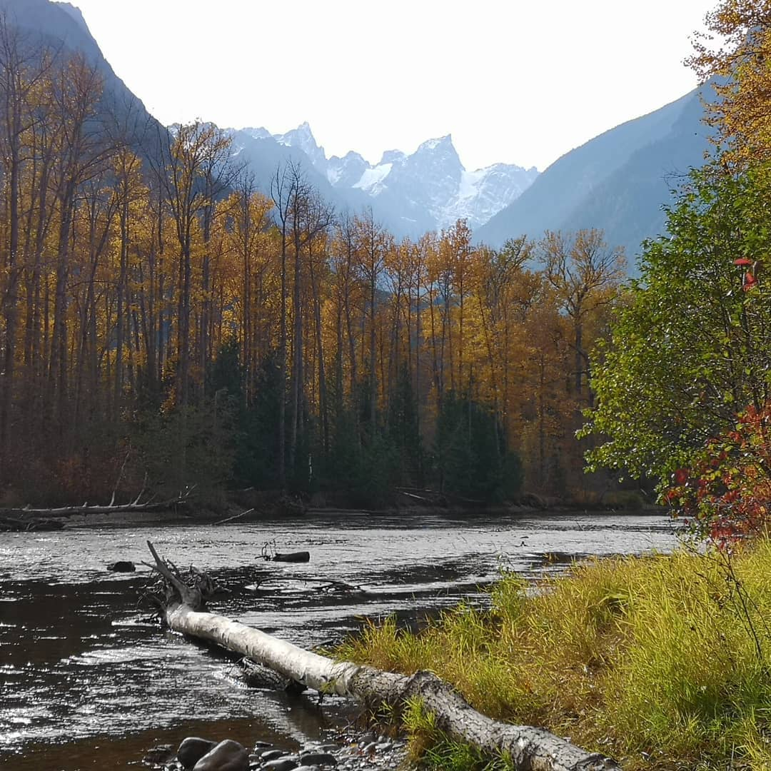 View of a gentle meandering river amidst green grass, red tinged trees, and snow capped mountains