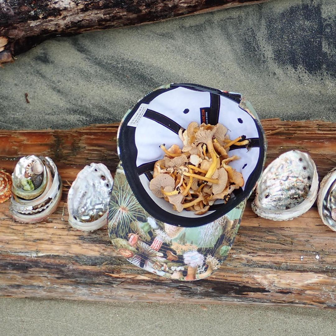 Four small shells surround a white bowl filled with mushrooms on a log