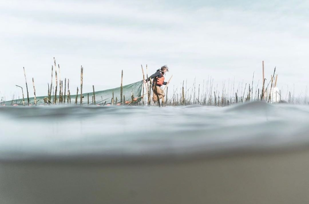 A Raincoast researcher pulls a net over grey Fraser River waters