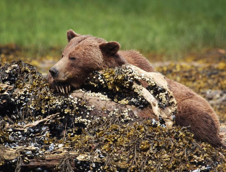 Entirely preventable conflict escalation with bears