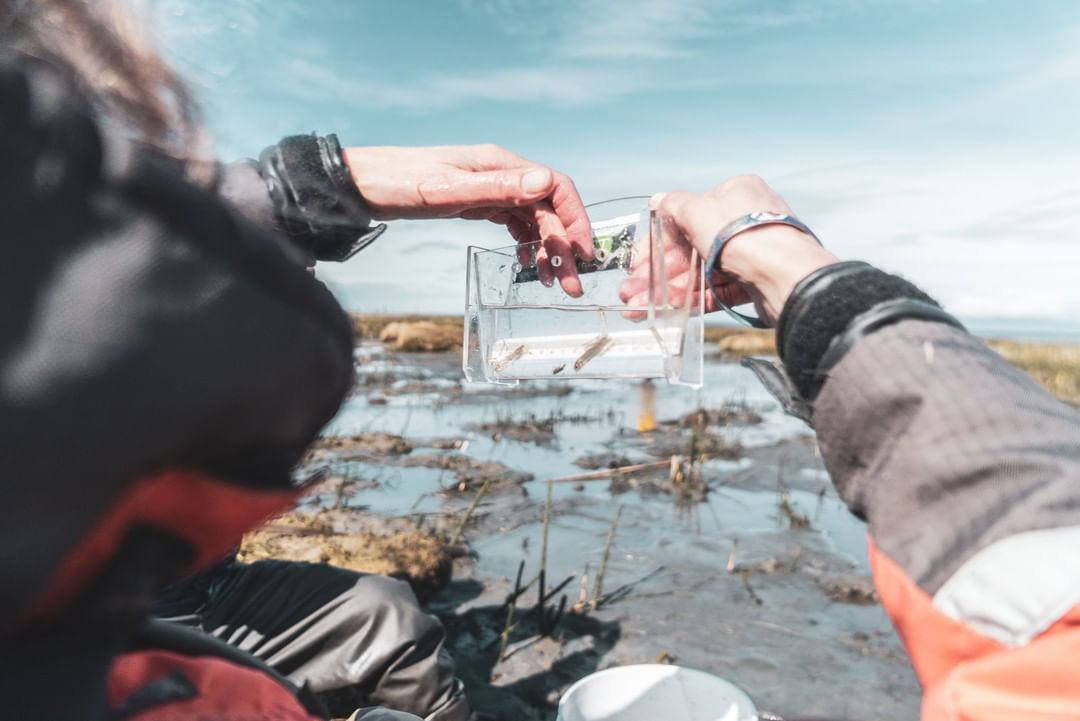 A researcher's two hands hold up a plastic bag with salmon in the foreground, while behind marsh, water, and blue sky stretches out.
