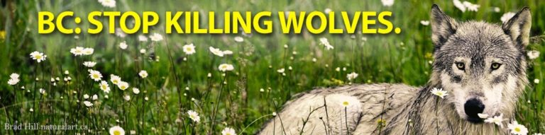 Take action to save wolves