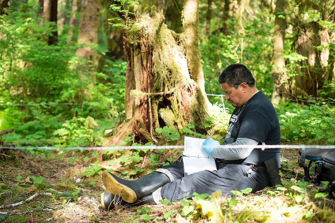 Howard Humchitt, Indigenous researcher sits on the ground in the forest noting down facts on paper, beside a trip wire to capture bear hair and a large beautiful tree on a sunny day.