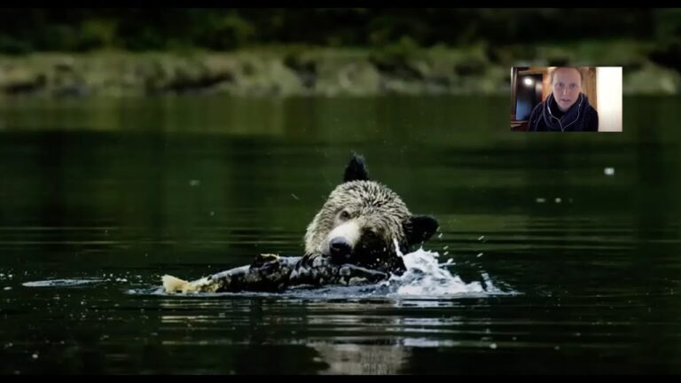 The salmon forest: how bears connect land and sea S1 E3