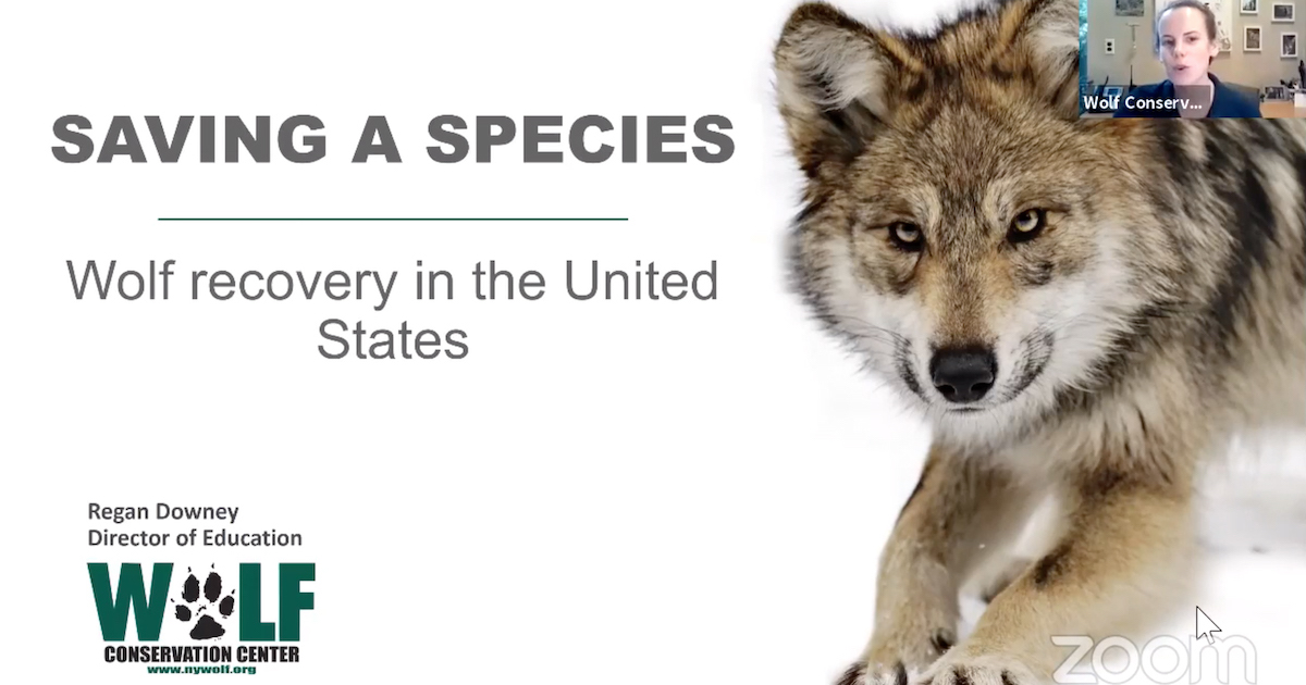 Saving a species, Wolf recovery in the United States: WCC.
