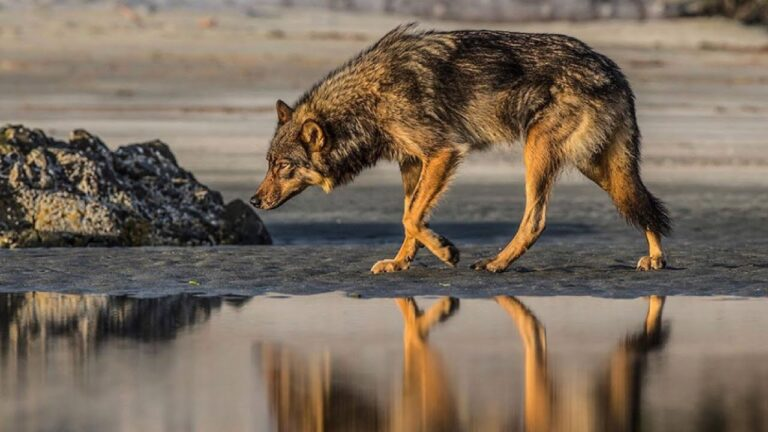 Wolf School 6: Conservation Solutions