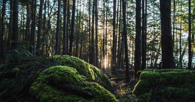 Summer job: Tree Protection Policy Intern