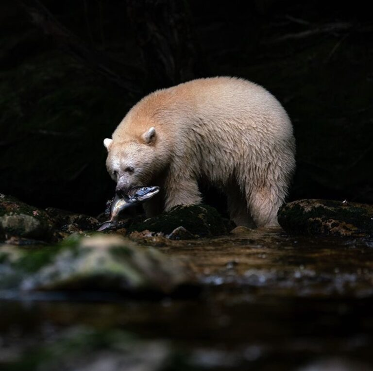 Raincoast Conservation research reached millions in 2020